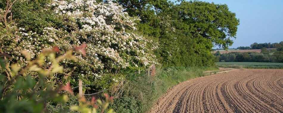 A summer hedgerow
